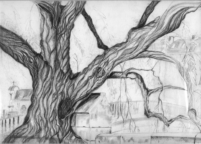 Sketch Tree by the Seine River Paris France